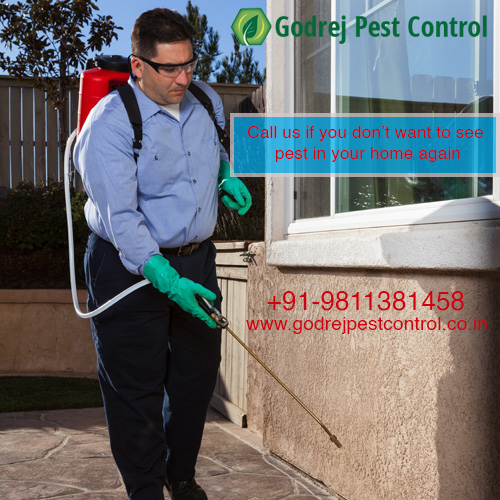 Pest Control Gurgaon | Call 9811381458 | 20% Off